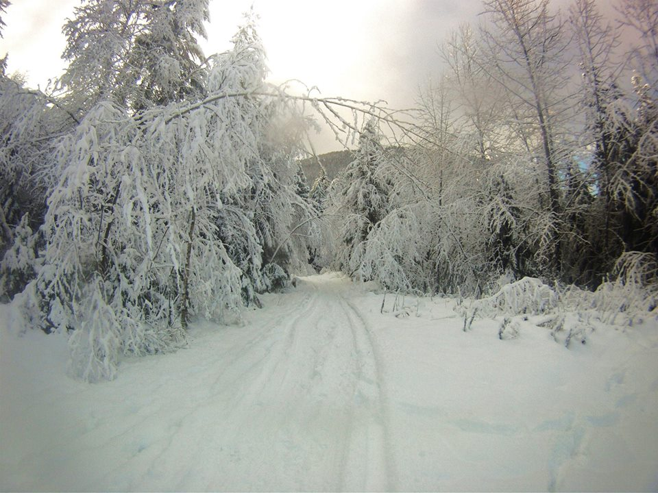 The driveway in Winter